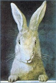 vintage rabbit someforeignletters vintage rabbit illustration petit 1903 frank
