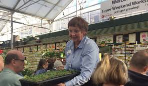 minnesota gardening is tricky business try starting your seeds