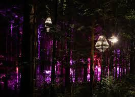 david trubridge lights up a magical redwood tree walk in new