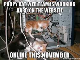Working Cat Meme - poopy cat web team is working hard on the website online this