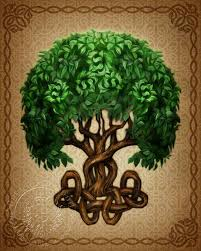 18 best wiccan tree of images on celtic tree of