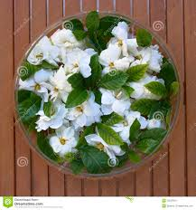 glass vase with gardenia flowers stock photo image 33220034