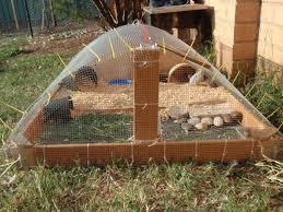 Backyard Chickens Forum by Http Www Backyardchickens Com Forum Uploads 45249 P1290044 Jpg