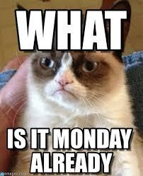 Grumpy Cat Monday Meme - what grumpy cat meme on memegen
