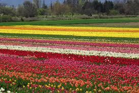 flowers florqal beautiful blossom landscape scenic beauty colour