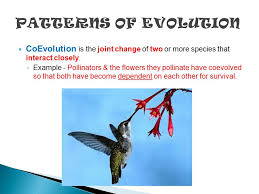 evolution u2013 change in populations over time history u2013 ideas that