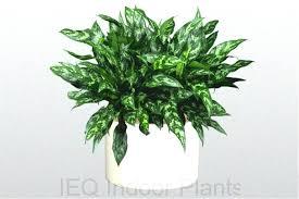 good low light plants indoor hanging plant low light indoor hanging plants low light best