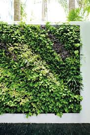 vertical gardening in singapore green options for a balcony or