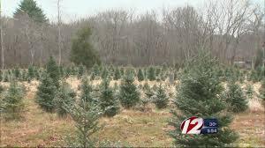 solar powered christmas tree farm youtube
