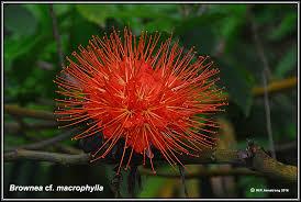Types Of Planting Flowers - cauliflory
