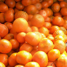 difference between thanksgiving and christmas what are murcott mandarins when in season u2013 eat like no one else