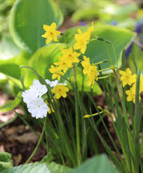aftercare tips for spring bulbs longfield gardens