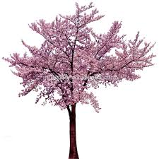 cherry blossom tree cherry blossom wedding decor cherry blossom wedding decor
