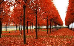 autumn season wallpapers 4212 hdwarena