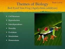 themes of biology eyed tree frog agalychnis calidryas ppt