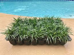 mondo grass qty 40 live plants shade loving