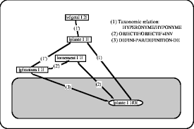 relational view of the concept géranium i 1 in the thesaurus net