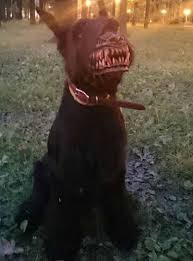 Zombie Dog Halloween Costume Zombie Dog Muzzle Bad Buy