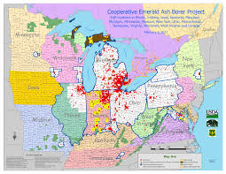 Elgin Illinois Map by City Of Elgin Illinois Official Website Emerald Ash Borer