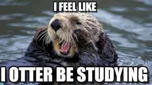 Otter Memes - i feel like otter meme on memegen