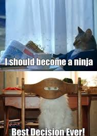 Meme Ninja - i should become a ninja viral viral videos