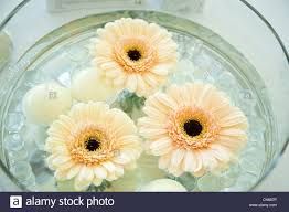 floating flowers a wedding table decoration floating flowers and candles stock