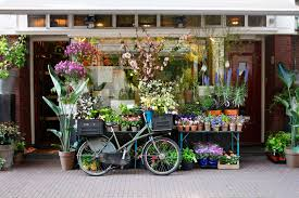 flower shops in tulips and tokin a springtime trip to freckle fair