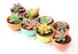 top 10 diy beautiful indoor planters top inspired