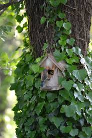 6319 best bird home images on pinterest bird feeders bird