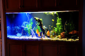 interior mesmerizing amusing modern fish tanks pictures design interiorlicious inspiring modern fish tank photo decoration ideas golimeco ornts nice simple design the amazing