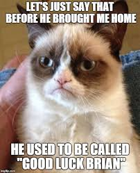 Good Luck Cat Meme - good luck brian imgflip