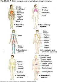 information on the respiratory system fosfe com