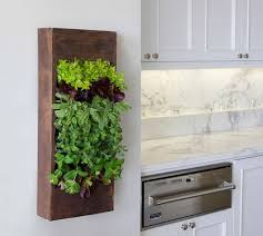 How To Decorate Small Kitchen 7 Stylish Ways To Use Indoor Plants In Your Home U0027s Décor
