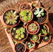 38 best gardening images on pinterest garden ideas gardening