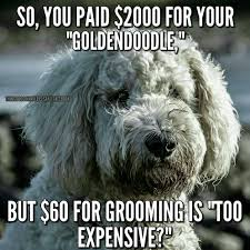 Making Out Meme - top funny dog groomer memes daily funny memes