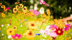 33 beautiful flowers wallpapers desktop backgrounds