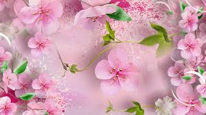 cherry flowers wallpapers flower blossoms sakura plum pink pinks spring bubbles bloossoms