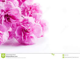 White Background Pink Soft Spring Flowers Bouquet On White Background Stock Photo