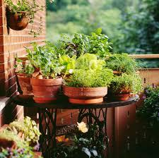 Urban Garden Portland Maine - a guide to urban gardening