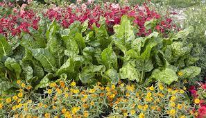 Edible Garden Ideas Add Edible Landscaping To Your Garden Startribune