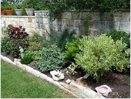 Tropical Plants For Garden - garden tips tropical plants and central tx