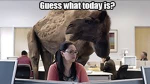 Hump Day Camel Meme - wednesday talking gif find share on giphy