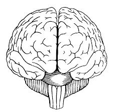 brain coloring page starsnues me
