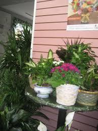 end of winter happenings at mr bokay flowers u0026 greenhouse