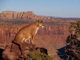 Arizona Wildlife Tours images Az wildlife adventure arizona scenic tours jpg
