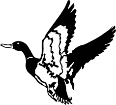 Ducks Unlimited Home Decor Flying Duck Clipart Black And White Clipartxtras
