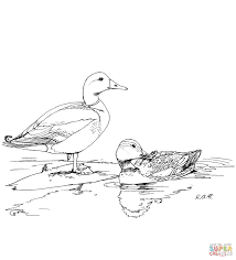 two mallard ducks coloring page free printable coloring pages
