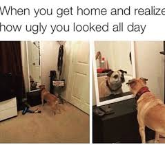 Tired Dog Meme - 62 adorable dog memes that will make you laugh all damn day