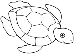 sea turtle drawing gallery clip art library