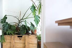 Plants For Dark Rooms by Stokperd Hastings House